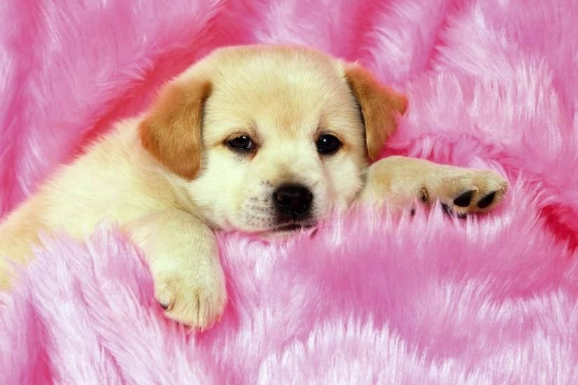 Beautiful Puppy Wallpaper 1920x1440 Hd For Mobile Really Cute Puppies Cute Puppy Wallpaper Cute Dog Wallpaper