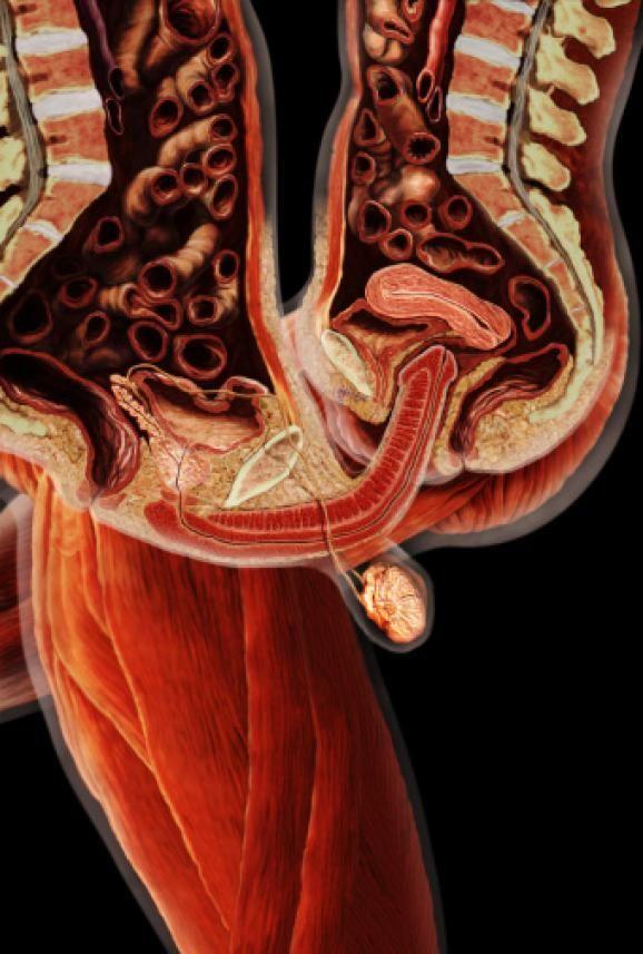 Sex under MRI helps us fully understand the mechanics of intercourse ...