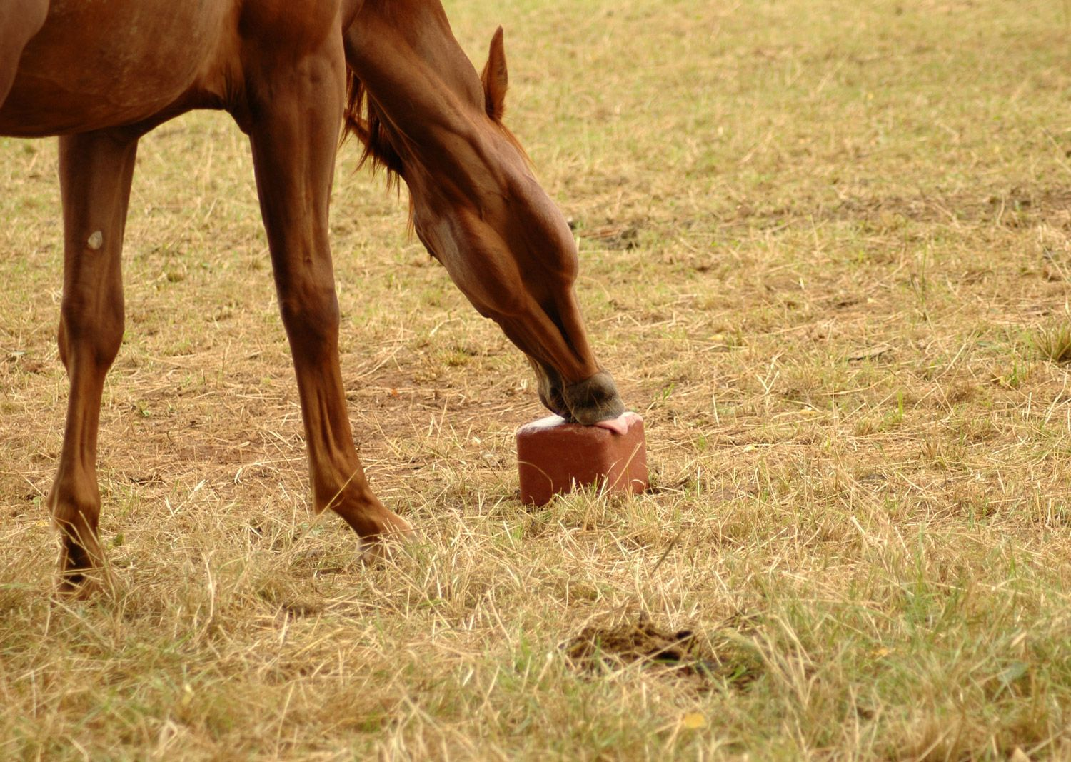 Can Horses And Cattle Have Same Salt Or Mineral Blocks Horses Horse Health Horse Care