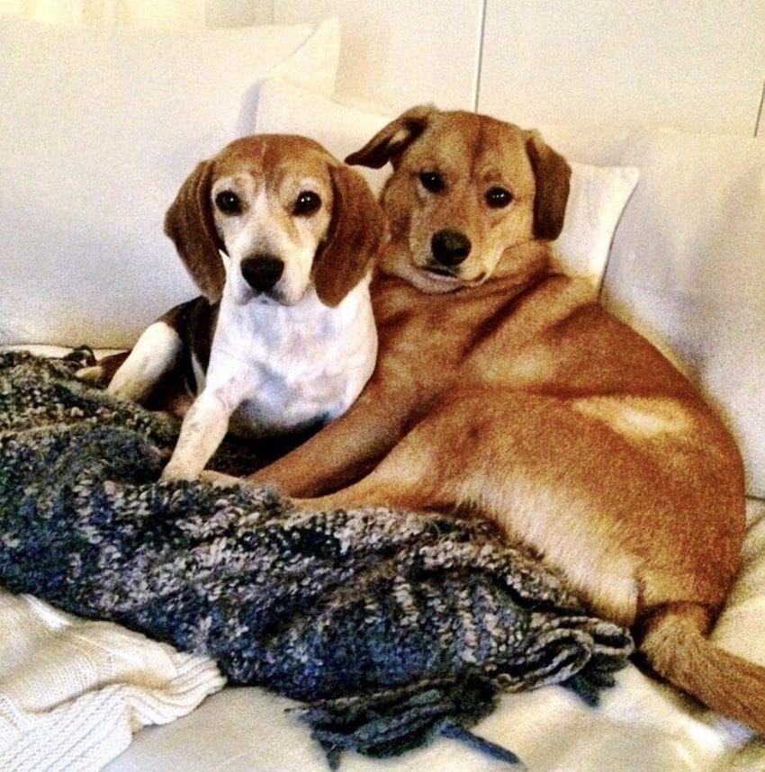 Meghan Markle Leaves Behind Her Beloved Rescue Dog After