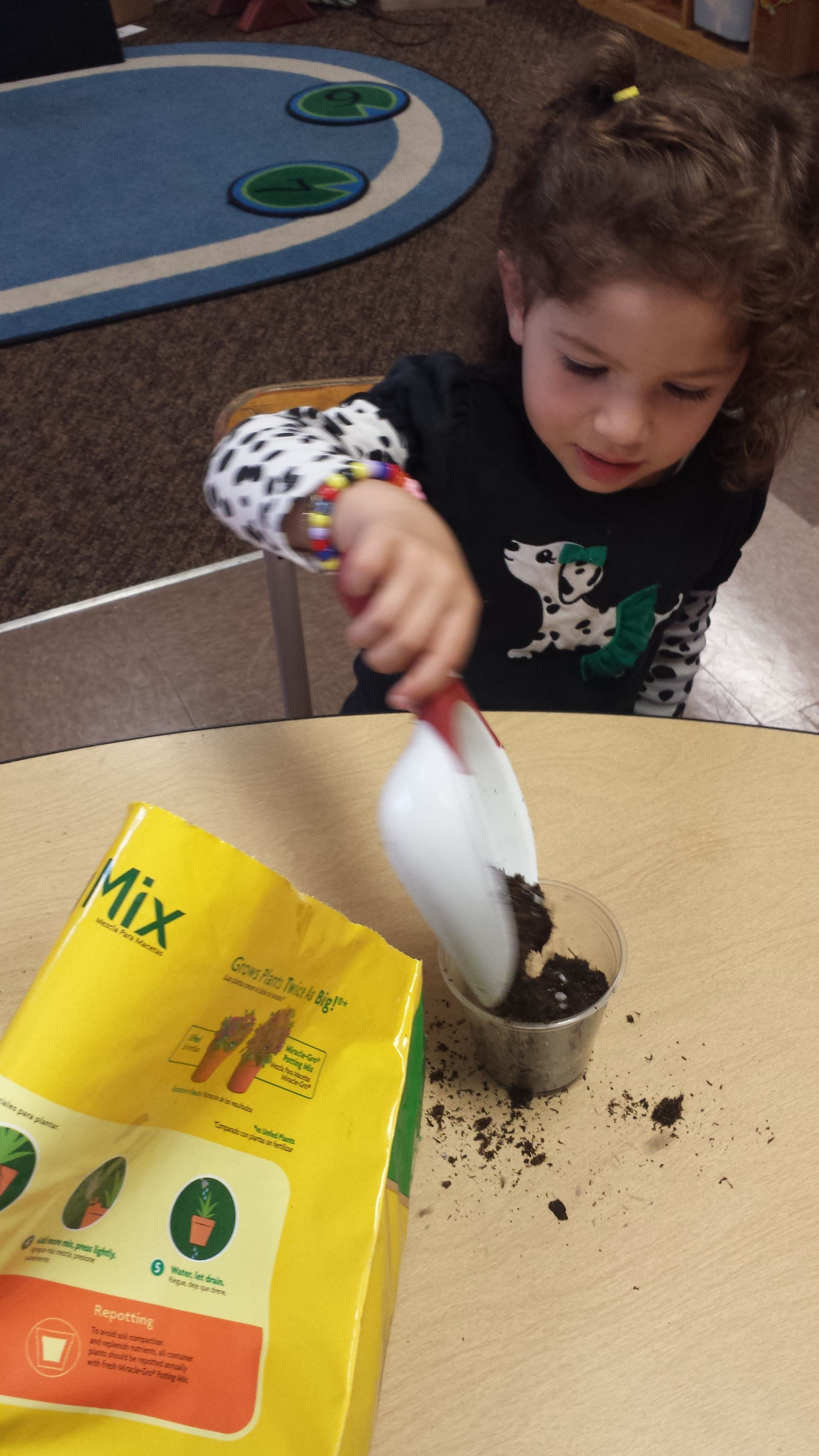 Planting Our Beans After Reading Jack And The Beanstalk