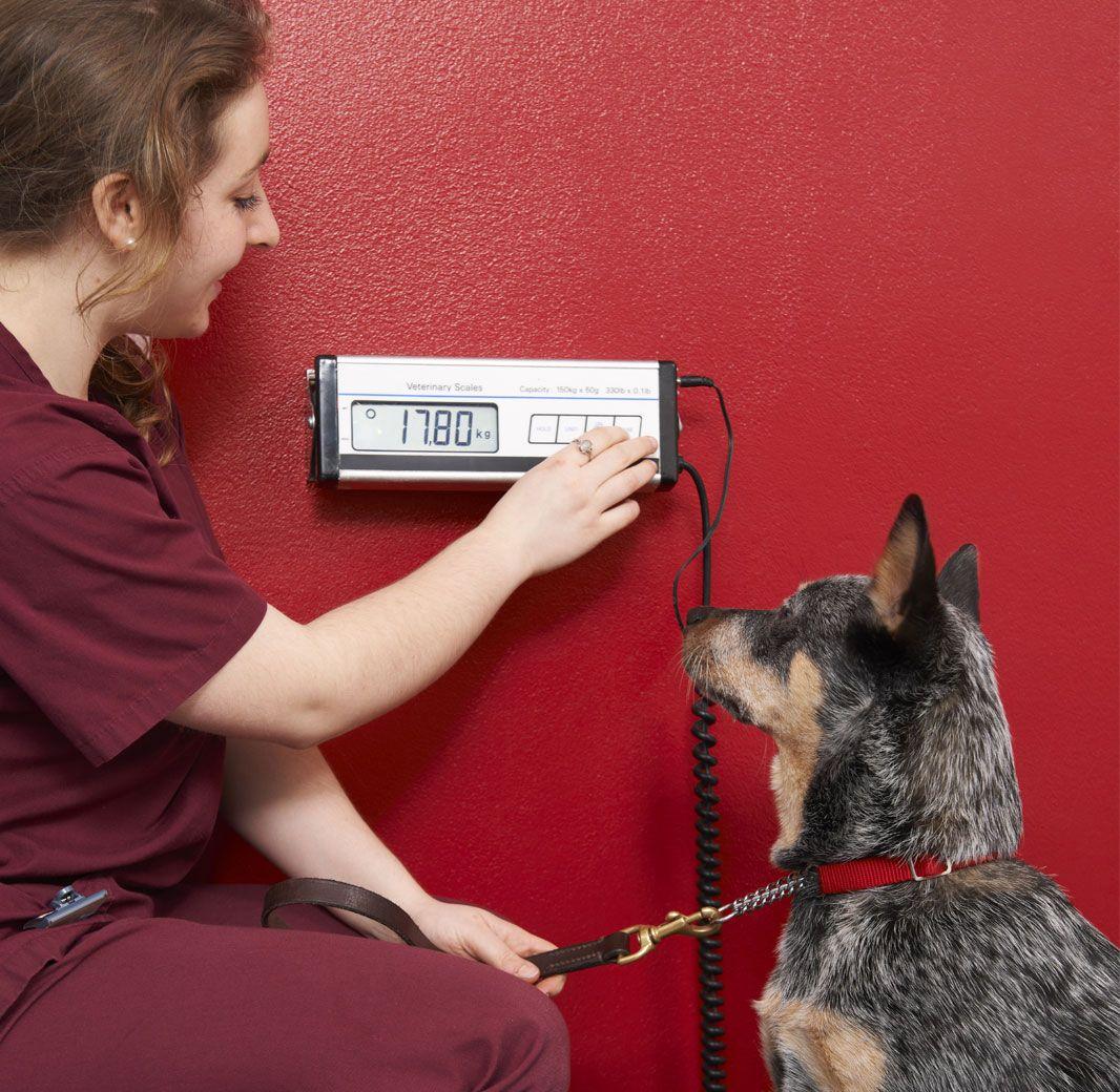 Nutritional Calculator For Dogs Dogs Homemade Dog Homemade Dog
