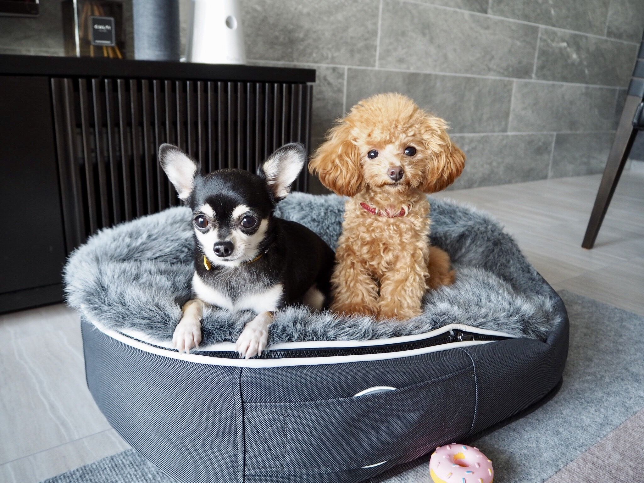 """we love our canine """"customers"""". ambient lounge pet beds"""