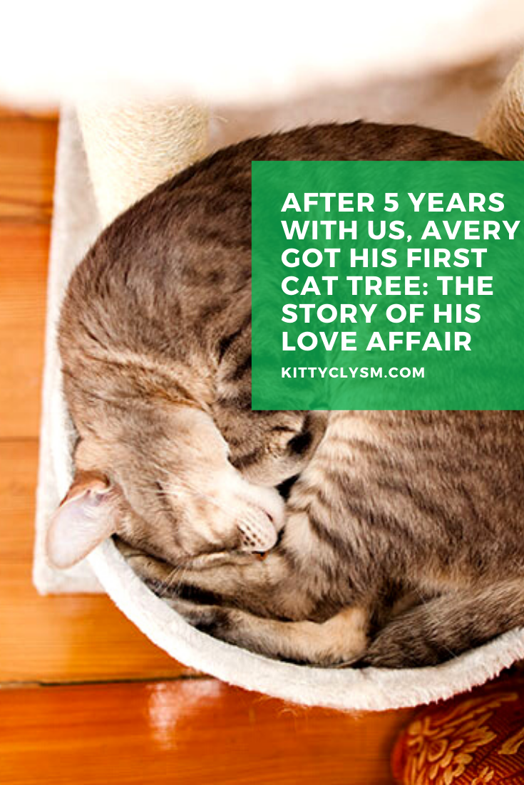 After 5 Years With Us Avery Got His First Cat Tree The Story Of His Love Affair Cats Cat Facts Cat Life