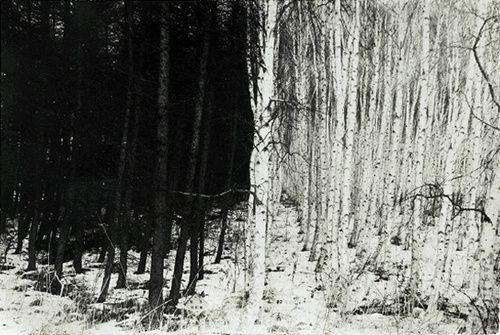 workman:    formsofblack:  'Untitled' Masao Yamamoto photography series, gelatin silver print