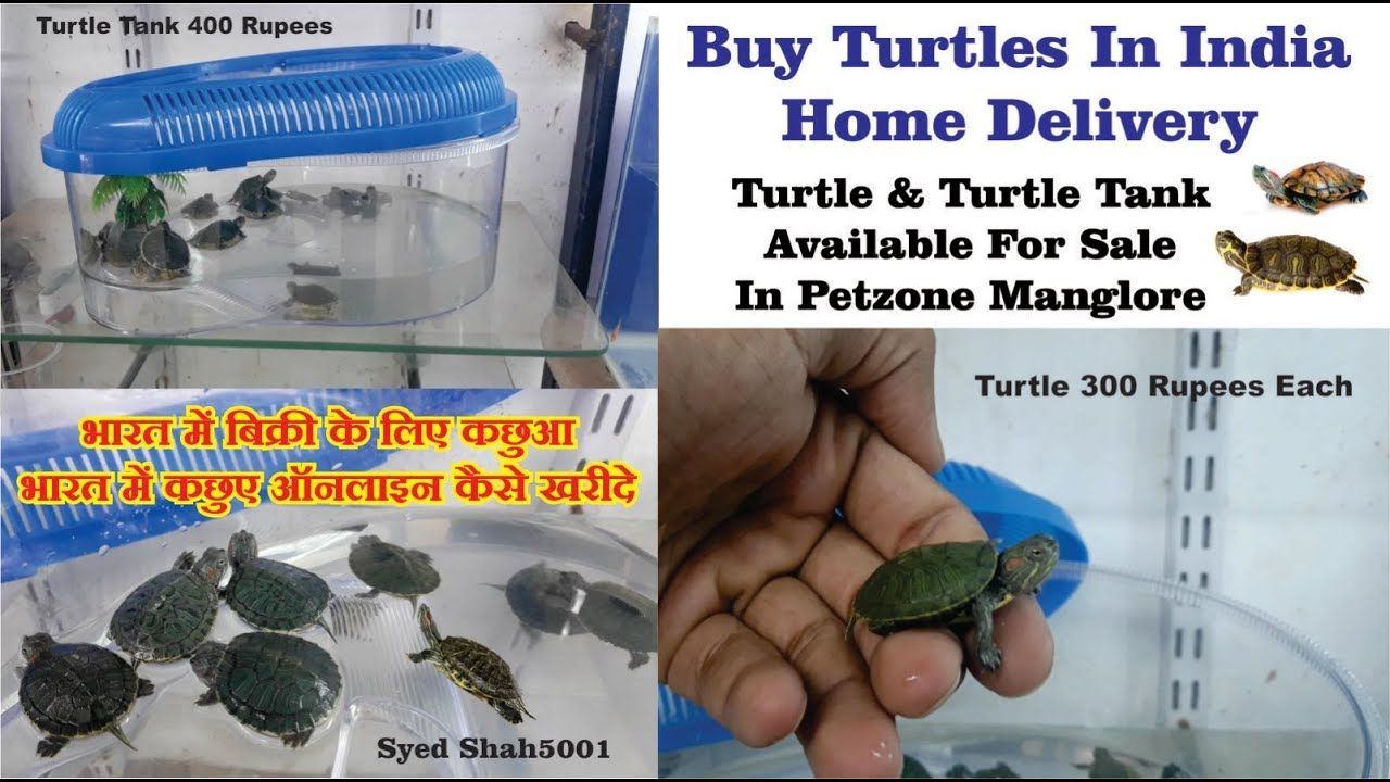 Turtles For Sale In Manglore India 300 Rupees How To Buy Turtles Online Turtles For Sale Aquariums For Sale Turtle