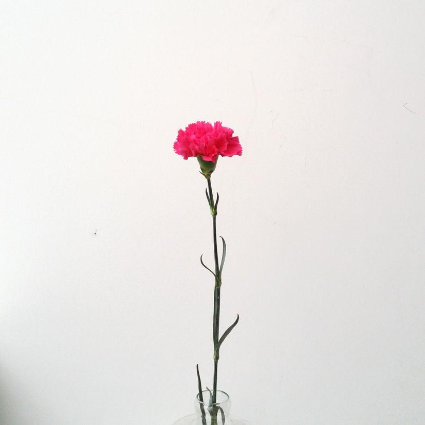 Fleur Du Avril Oeillet Ikebanart Les Fleurs Tattoos First
