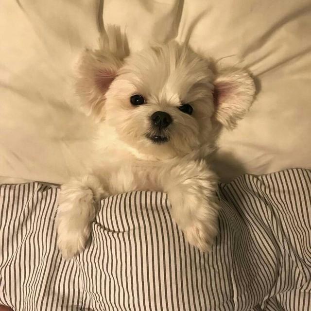 Pin By Malina Pelitera On Roommates In 2020 Puppies Animals Cute Puppies