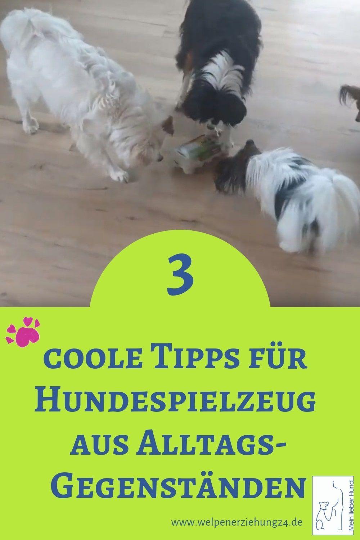 Quick Tipp Hundespielzeug Aus Alltagsgegenstanden In 2020