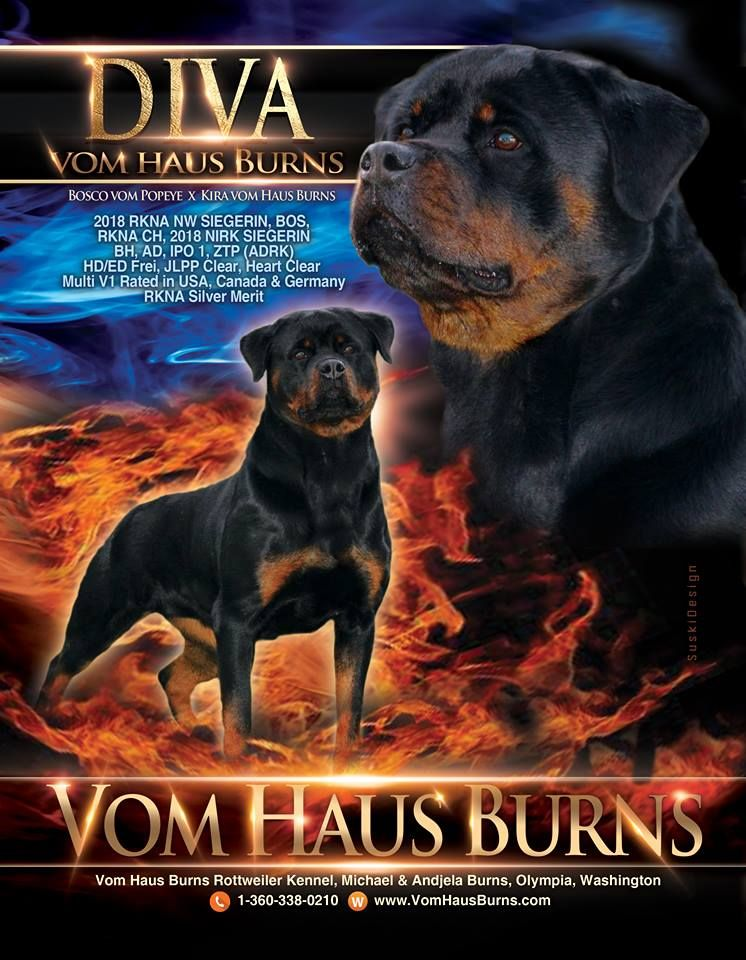 Vom Haus Burns Rottweiler Kennel Michael Andjela Burns Olympia