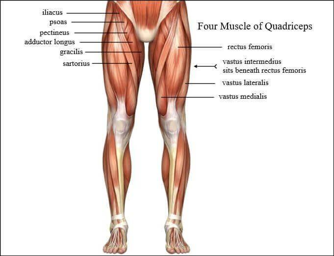 Muscle anatomy exercises