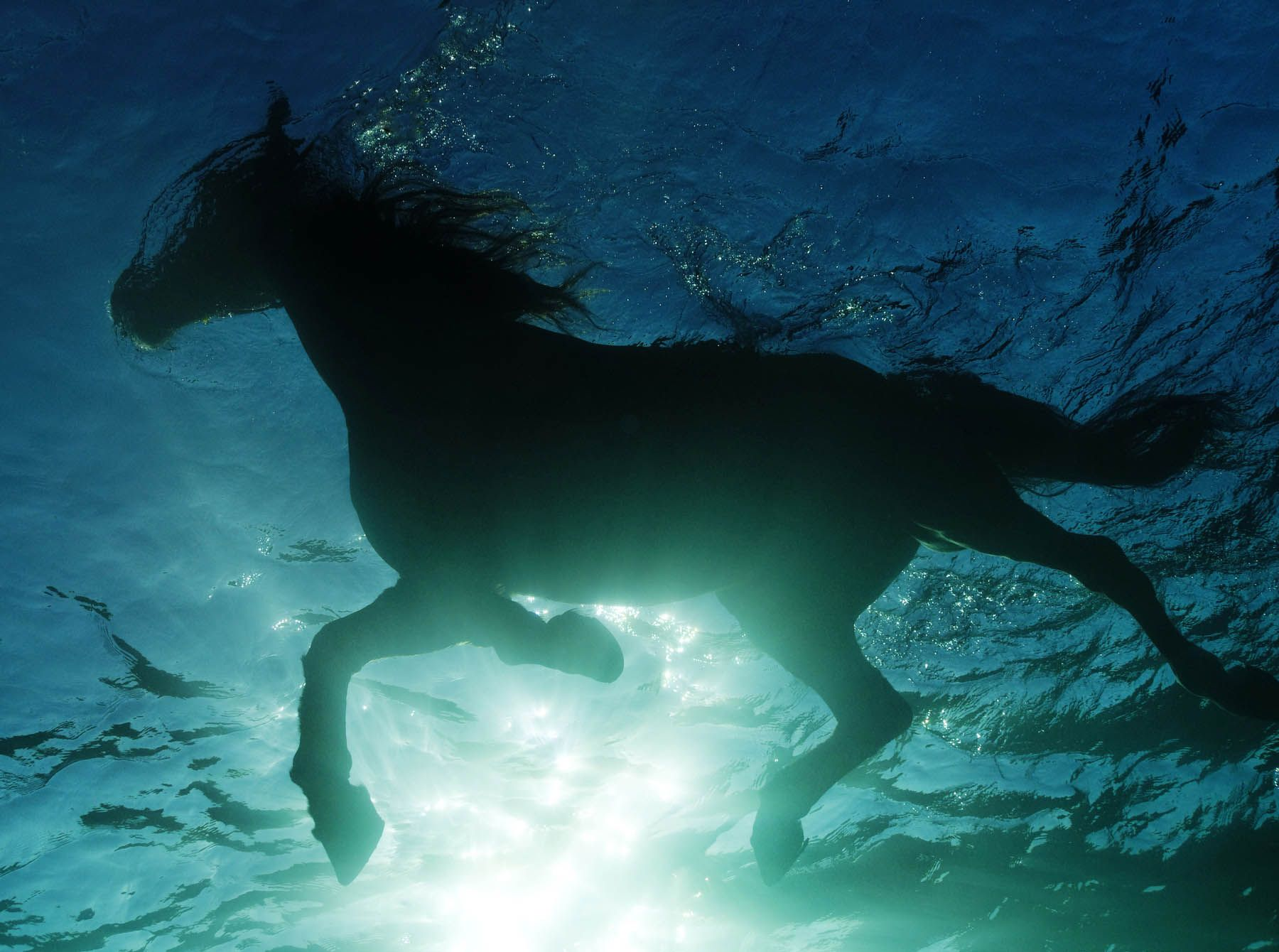 water horse horse horse in water hd photo � nice hd