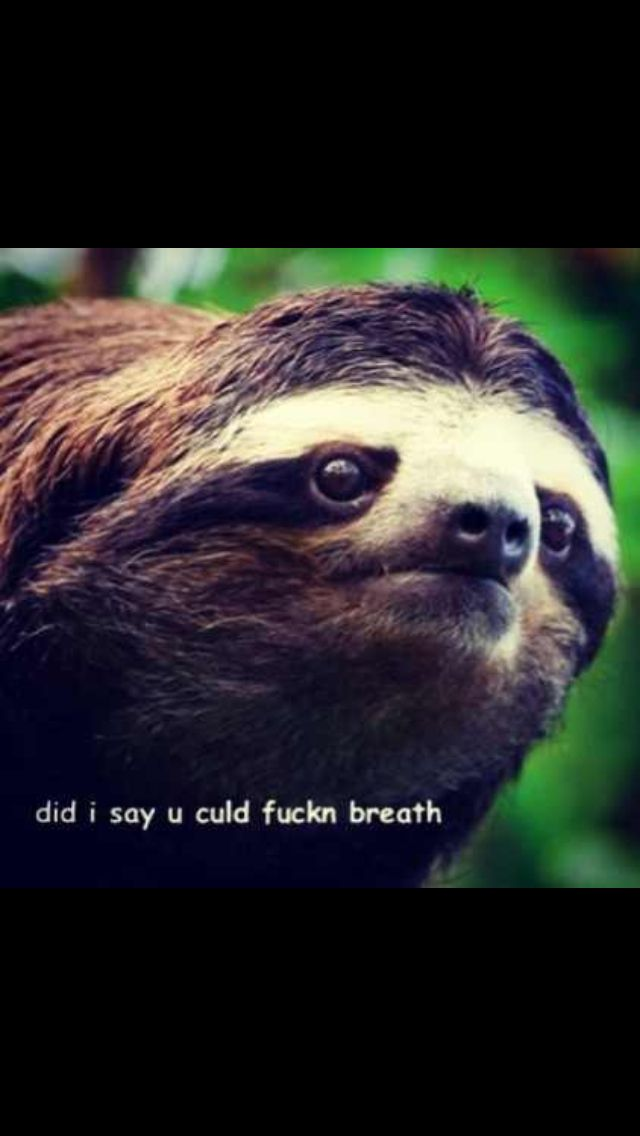 Lul another sloth meme... And yes I misspelled lol on ...