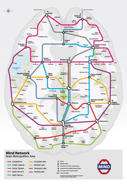 Subway Map Of The Brain.This Is What Your Brain Would Look Like As A Subway Map Subway