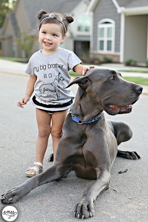 Ships Asap My Big Brother Is A Great Dane Great Dane Baby