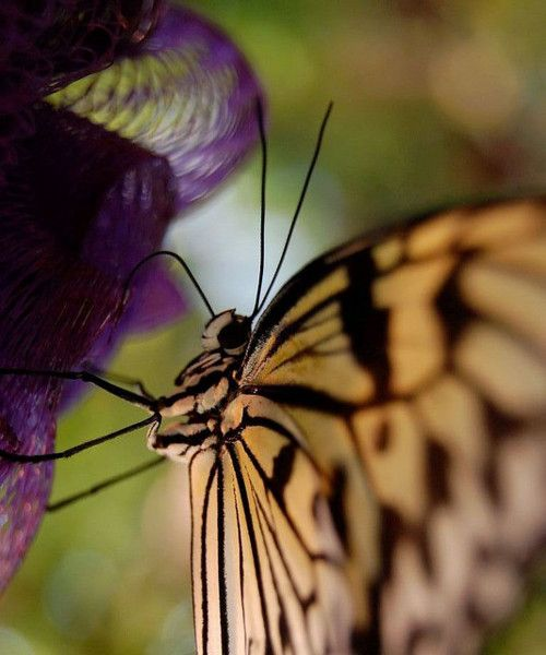 Butterfly…