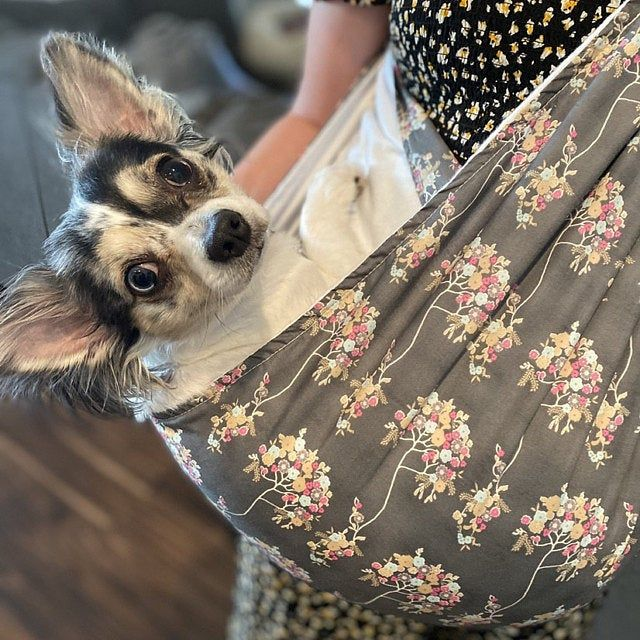 Pin On Puppy Bonding Slings