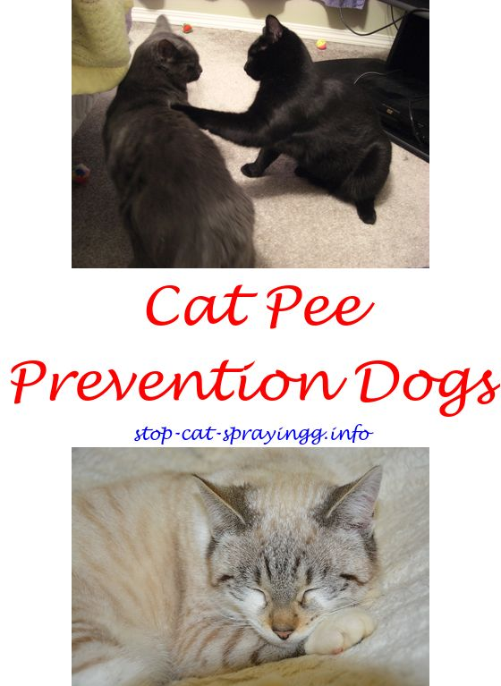 spray for cats to stop peeing cat smell out of carpet cat pee