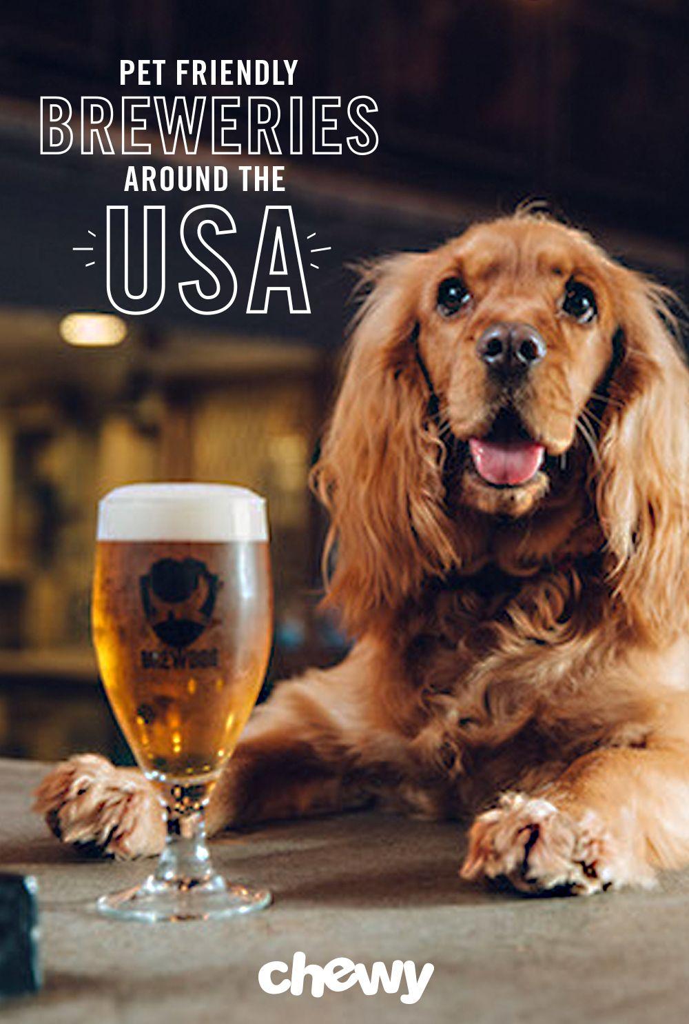 10 DogFriendly Breweries Dog friends, Great dane rescue