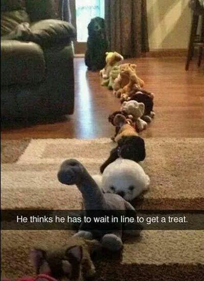 Awe!  Poor pup!!  LOL