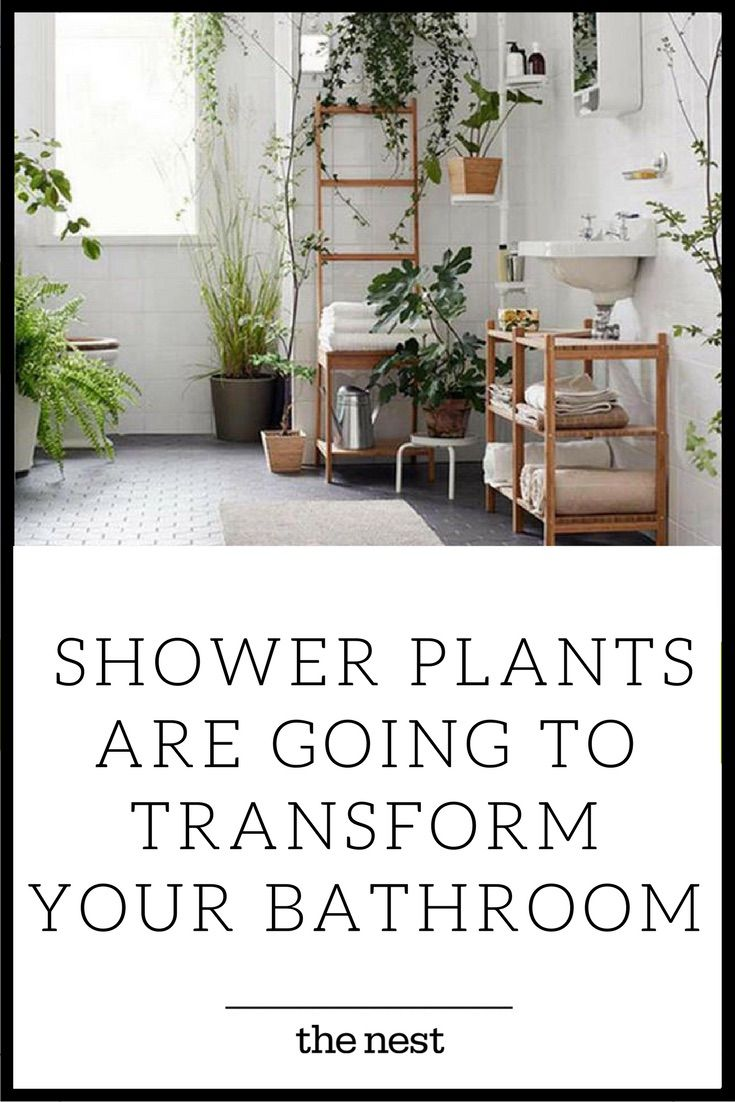 Shower Plants Are Going To Transform Your Bathroom Shower Plant Bathroom Plants Bathroom Plants Low Light