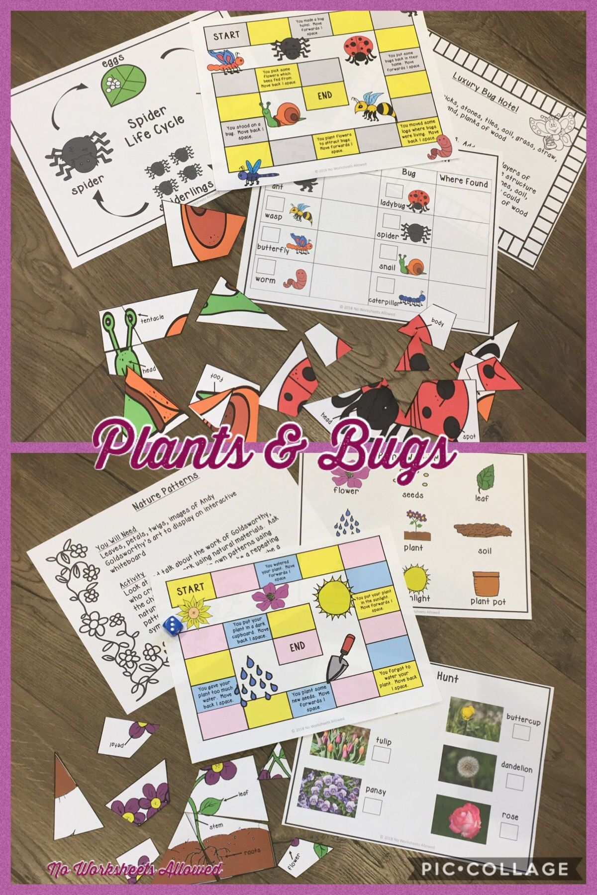 Teach Your Students About Plant And Bug Parts Needs Life