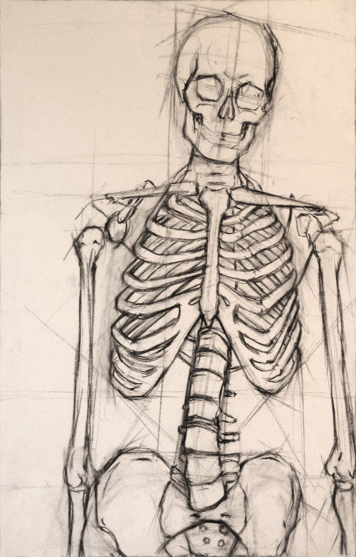Skeleton - notice the planning lines that remain around the skeleton. The artist was measuring angles and lengths.