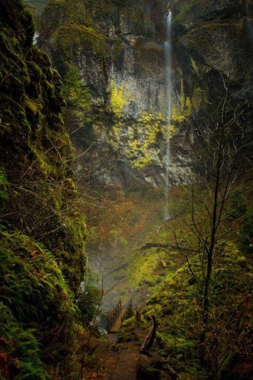 "renamonkalou: ""Gorge Trail Trail 400 crossing McCord Creek at Elowa Falls ~ Columbia River Gorge © Luke Detwiler """