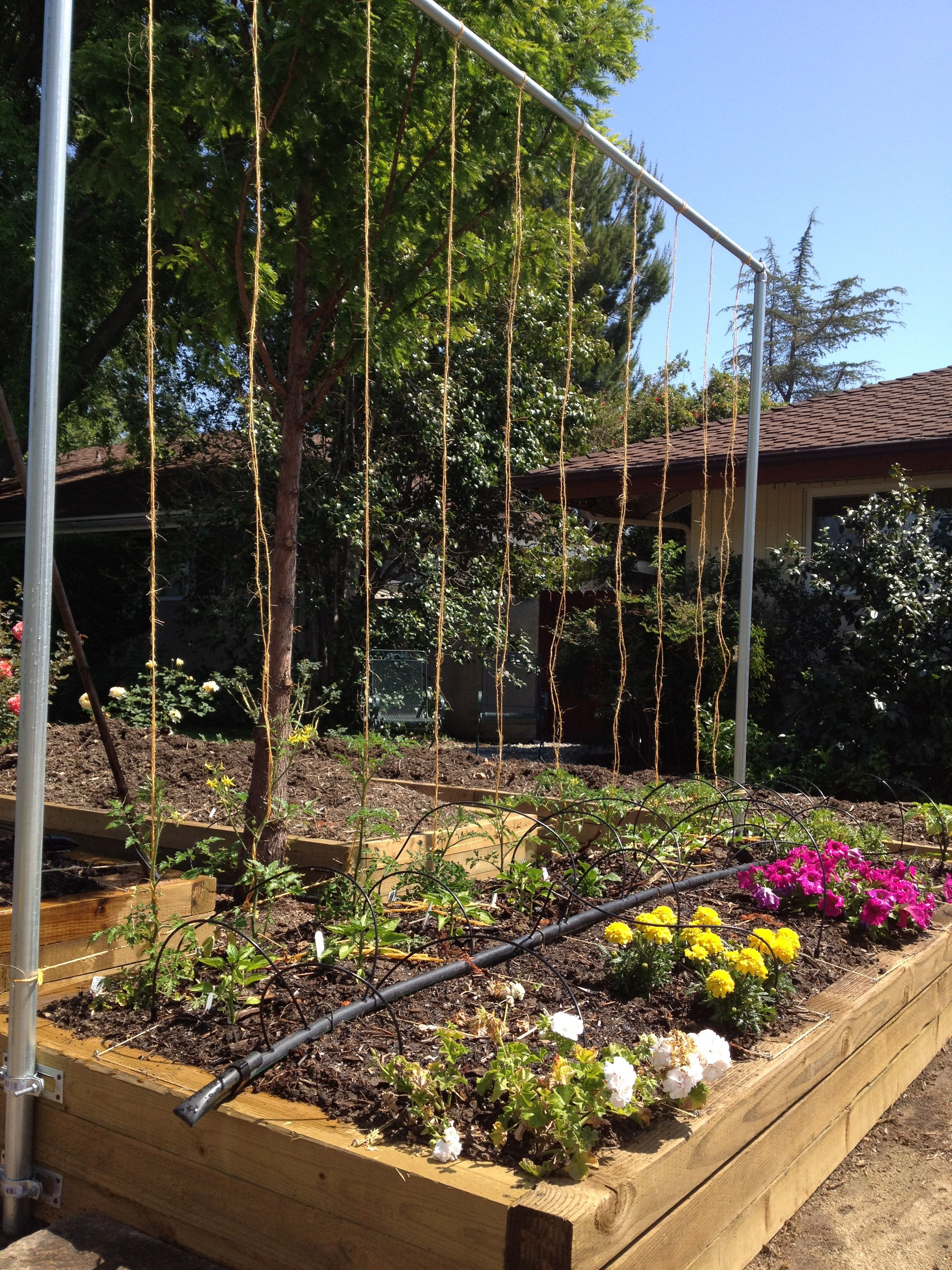 Square Foot Gardening: Planter bed with vertical trellis for tomato ...