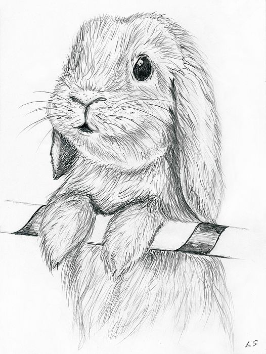 Curious Rabbit | Pencil drawings of animals, Animal sketches
