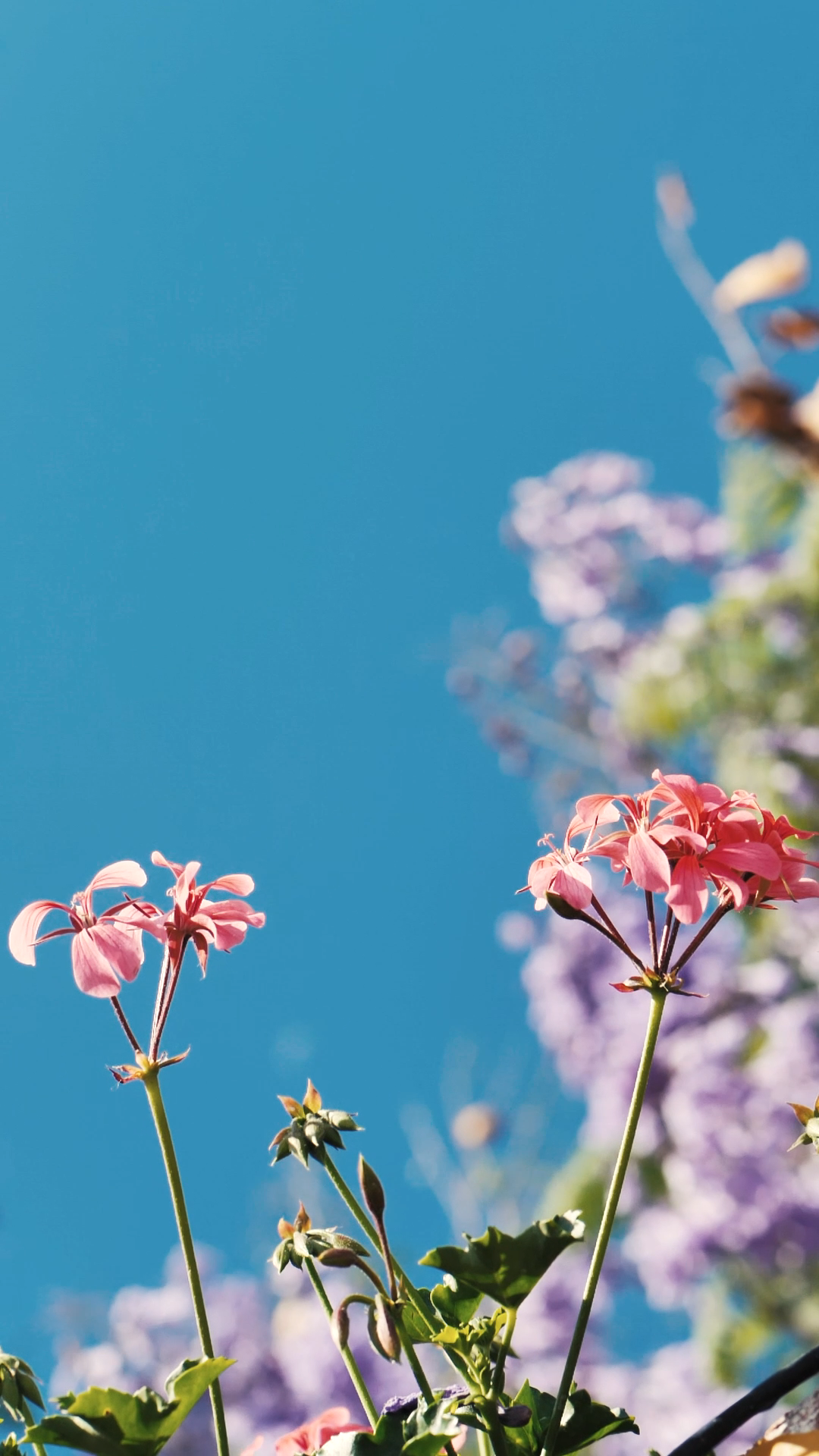 Small pink flowers move gently in a breeze, purple flowers and a blue sky in the background