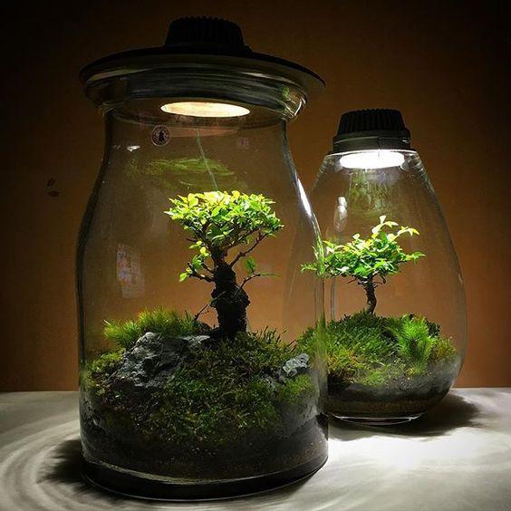 Terrarium light jardin pinterest terraria moss for Jardin glass jars