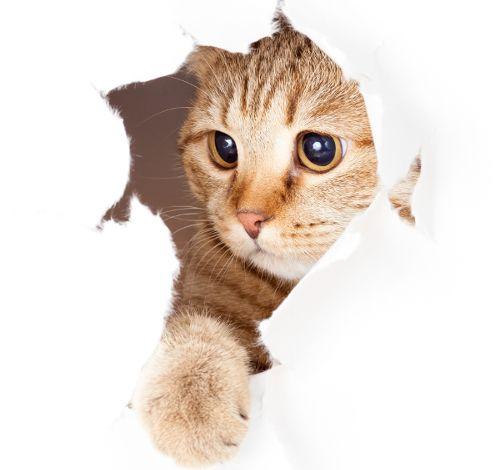 アパートで猫を飼う注意点 アドバイス 動物 子猫 猫