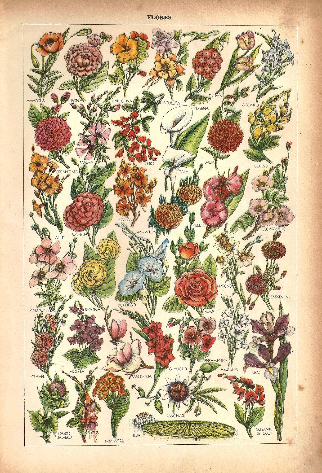 Flores. Lámina extraída de Sapiens, Enciclopedia ilustrada