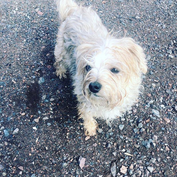 Is This Your Dog? Duluth Unknown Breed Unknown Gender
