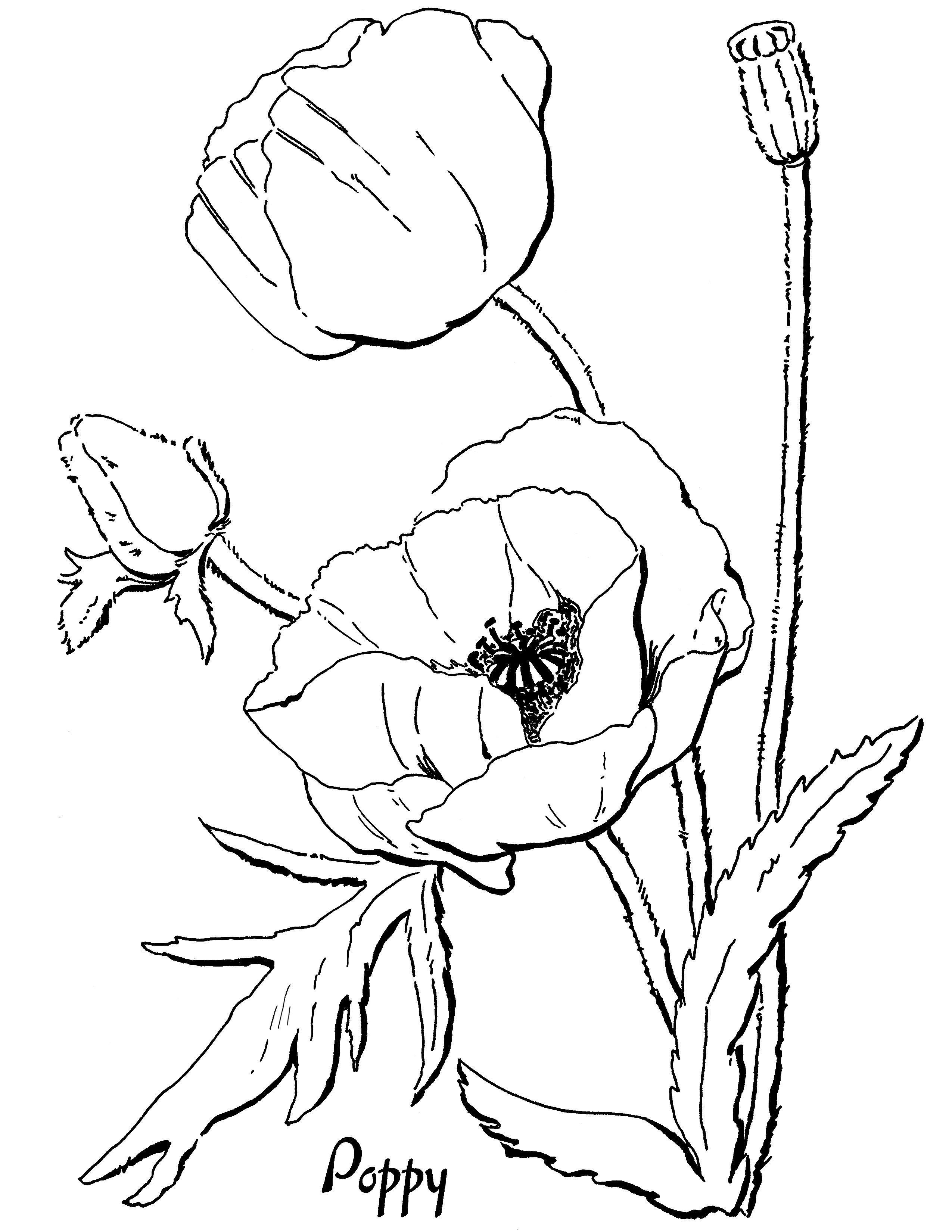 Pin By Inguna Kalnina On Izsuvumi Poppy Coloring Page Vintage
