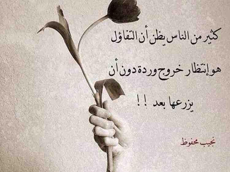 خلفيات حكم و أقوال فيسبوك كثيرون يظنون التفاؤل هو إنتظار وردة لم يزرعوها بعد Arabic Quotes Words Quotes Words