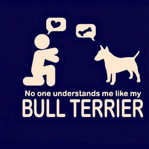 #IoveYou  #MiniBullTerrier#Bullterrier#BullterrierPics#BullTerrierInstagram#ILoveDogs#ILoveBullTerrier#BullTerrierLove#BullTerrierStyle#EnglishBullTerrier#BullTerrierWorld#BullTerrierLife#Dogstagram#Doglovers#Doglife#DogOfInstagram#Dog#MyDog#Dogs#Cachorro#Perro#Brasil#Brazil#SaoPaulo#Tatuape