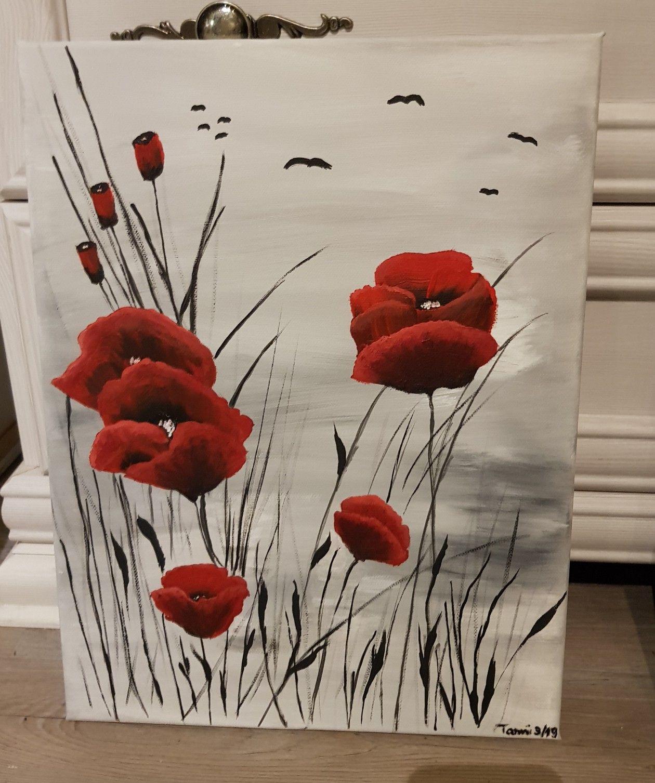 Mohnblumen Mohnblume Mohn Blumen