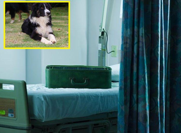 Mete a su perro en una maleta y entra al hospital