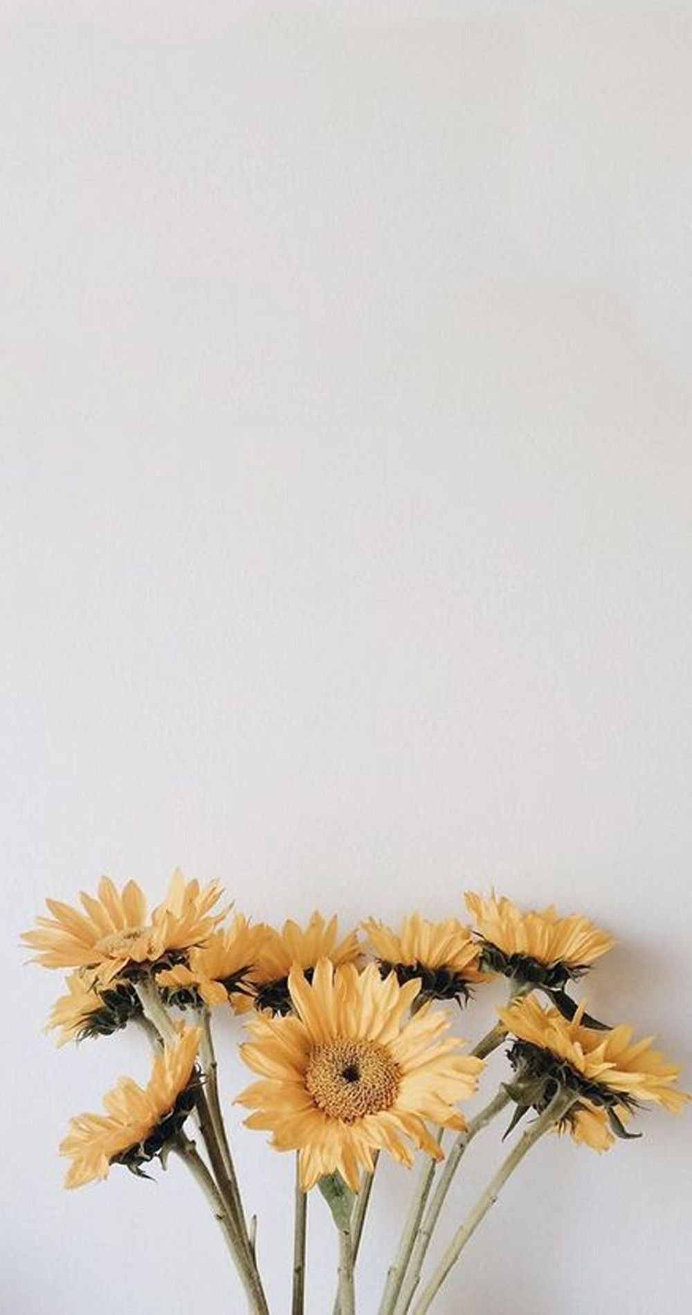 Ari & Rachel ♥ Photo: tumblr wallpapers ➵