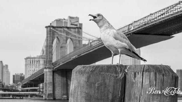 Brooklyn Wildlife | Flickr - Photo Sharing!