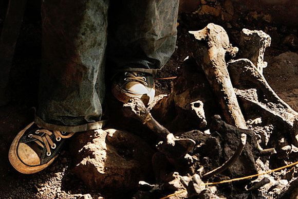 Major fossil cache in L.A. | Prehistoric, Fossils ...