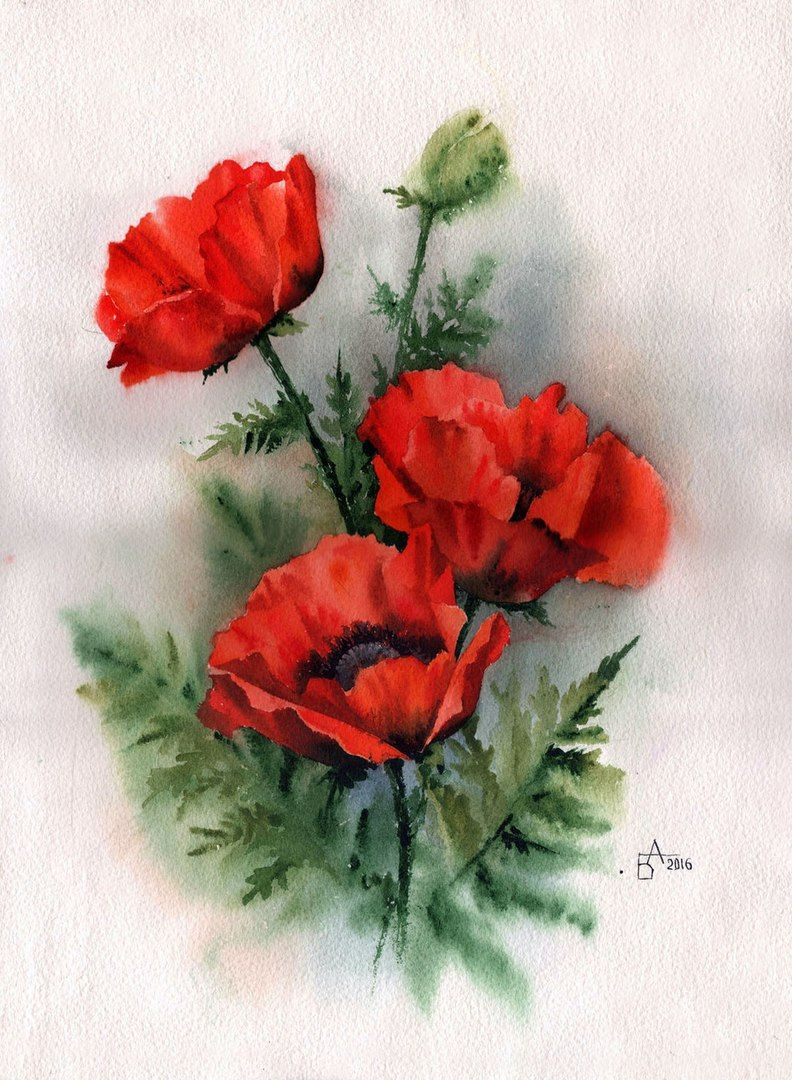 Flowers Pinterest Flowers And Paintings