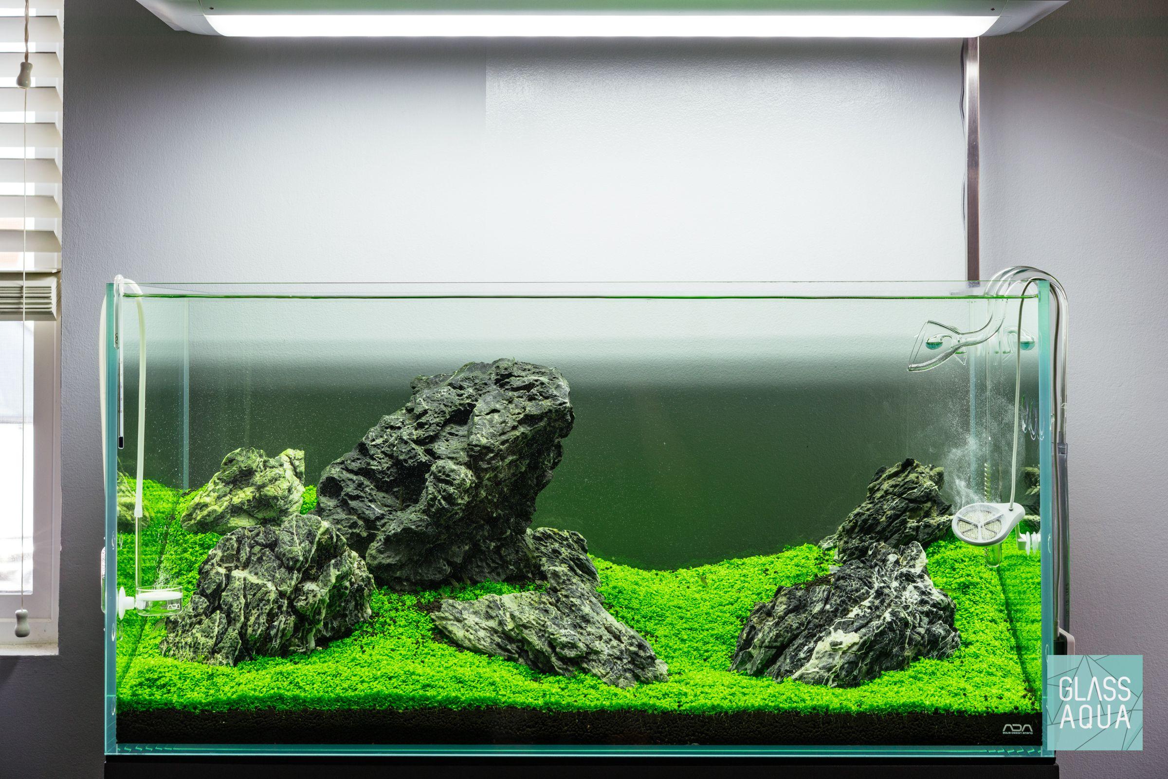 Fully Carpeted Iwagumi Aquascape Planted Aquarium Tank Aquarium Aquascape Aquarium Fish Tank Plants