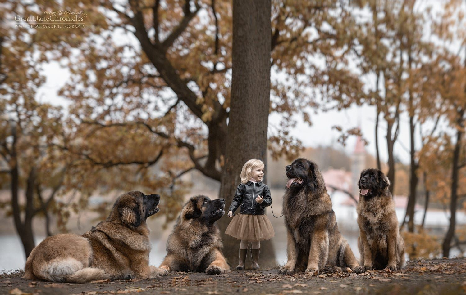 Little Lisa And Her Big Friends By Andy Seliverstoff On Px - Tiny children and their huge dogs photographed in adorable portraits by andy seliverstoff