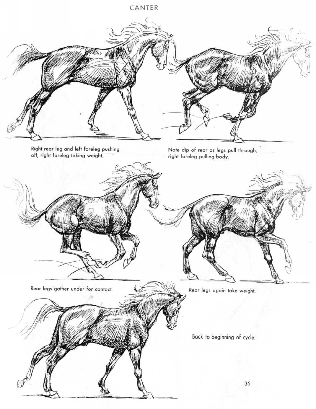 The Art of Animal Drawing by Ken Hultgren | Drawing | Pinterest ...