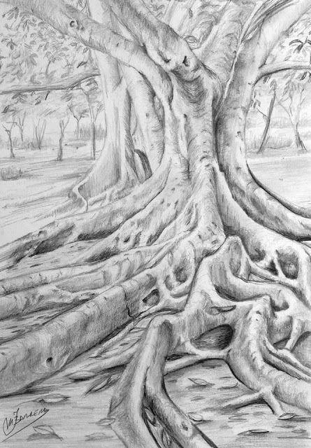 Cuaderno De Apuntes Dibujo De Ficus A Grafito Paso A Paso Arbles