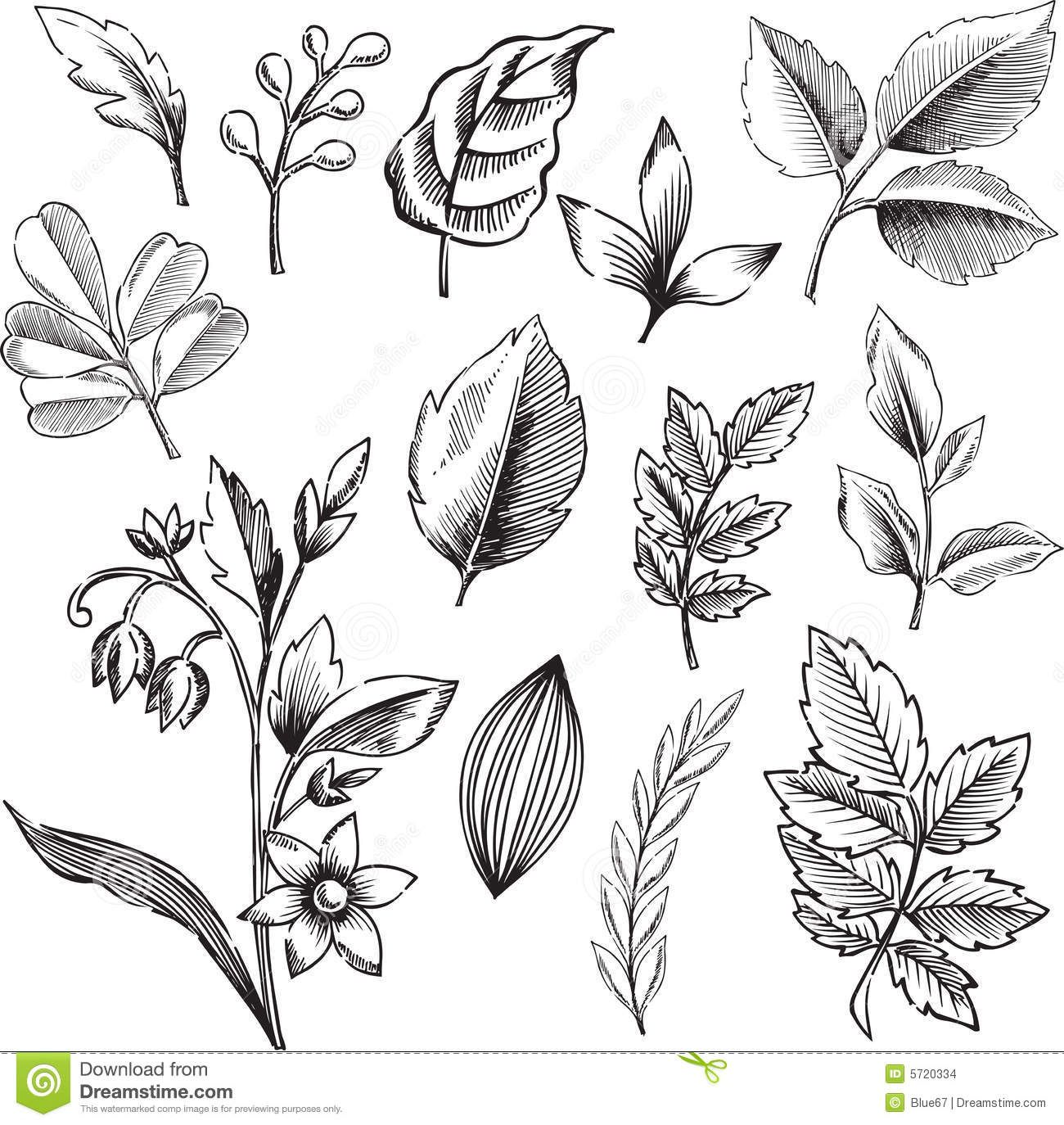 Leaf Illustrations Black And White - Google Search