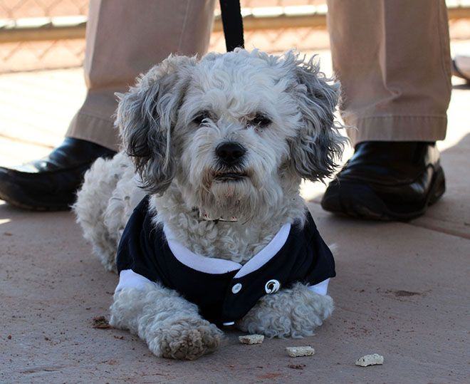 Hank The Baseball Dog Dogs Working Dogs Spring Training